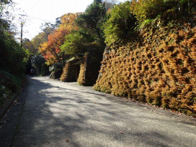 亀ヶ谷坂切通4