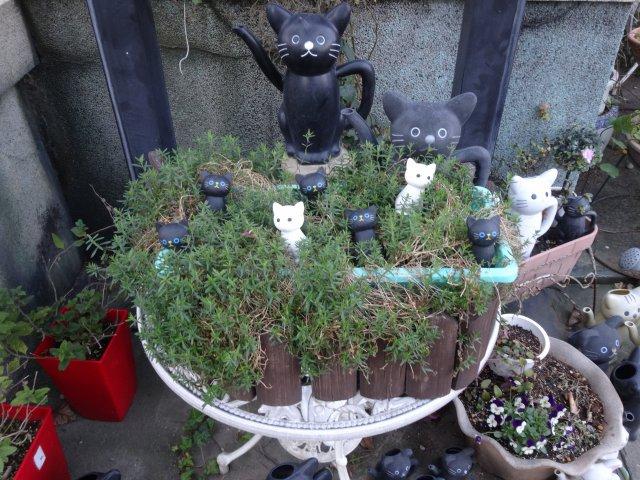 今戸神社15