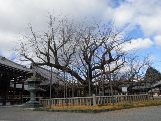 西本願寺4