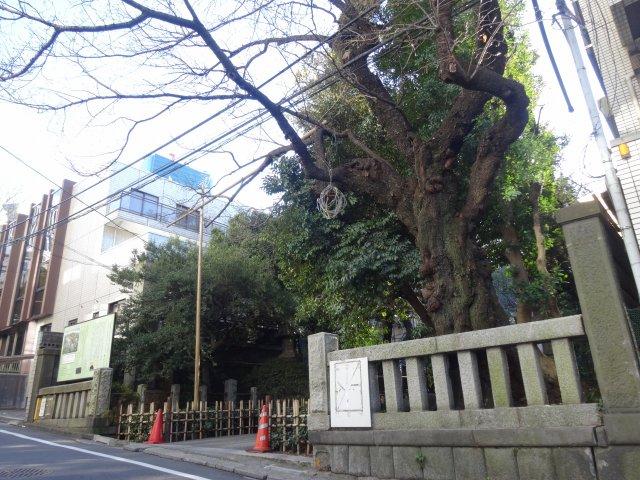 赤坂氷川神社5