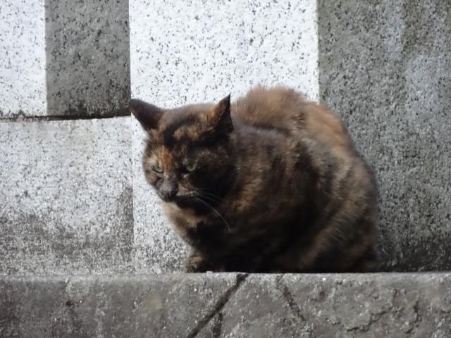 品川氷川神社4