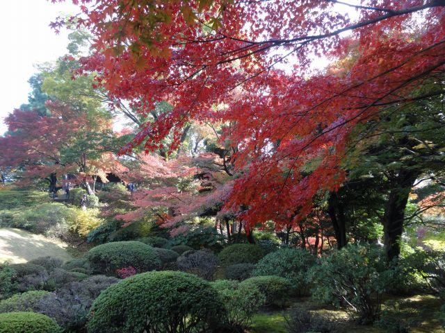 旧古川庭園6