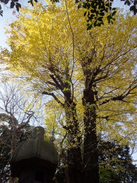 旧古川庭園9