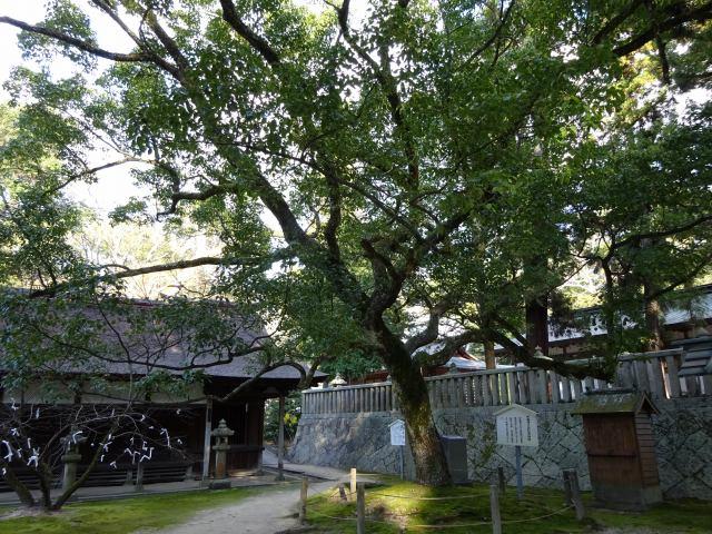 大山祇神社9