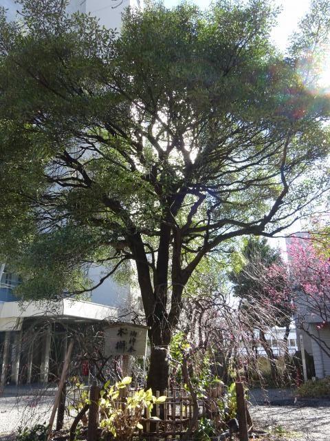 牛天神北野神社5