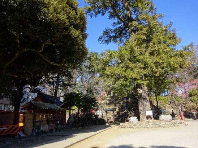 駒込富士神社12