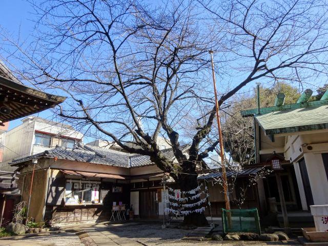 駒込天祖神社11
