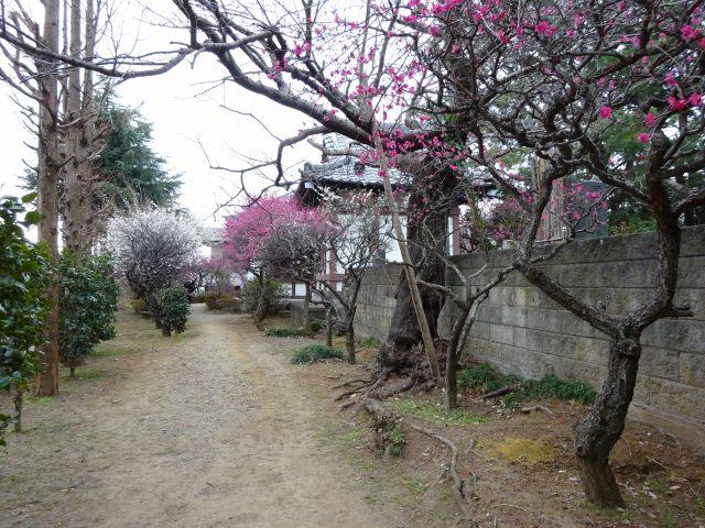 法華経寺奥の院5