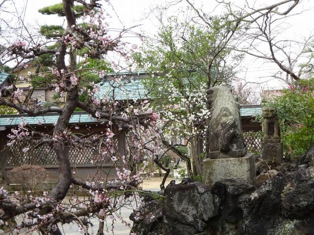 白幡天神社13