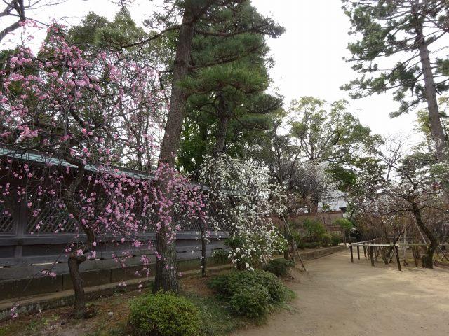 白幡天神社3