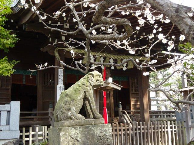 白幡天神社5