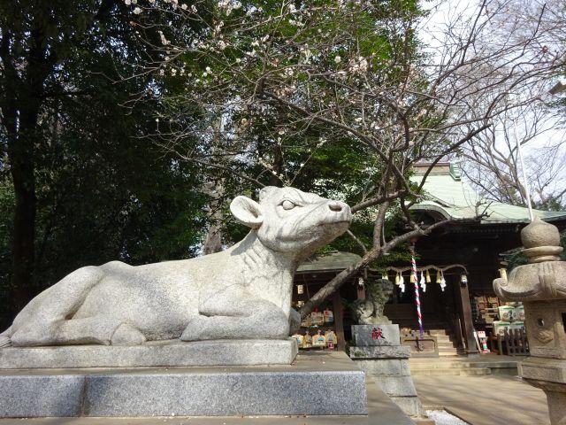 小金井神社13