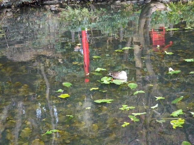 貫井神社15