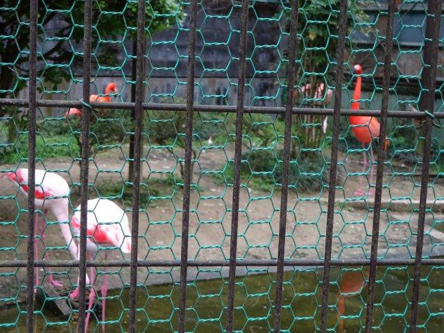 福知山動物園12