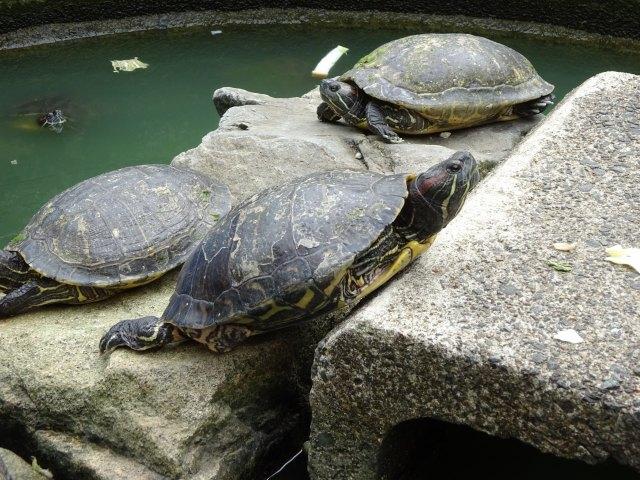 福知山動物園19