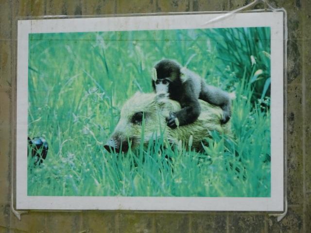 福知山動物園21