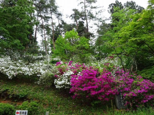 福知山動物園3