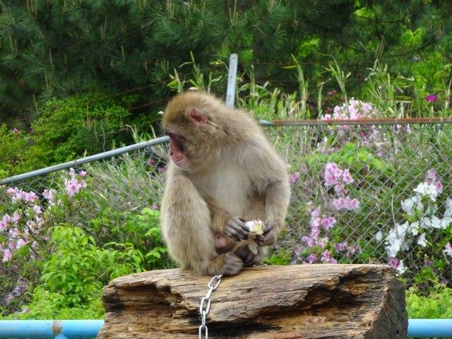 福知山動物園4