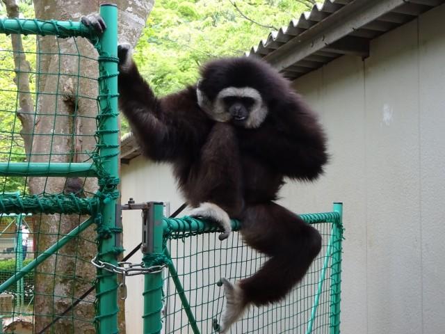 福知山動物園6
