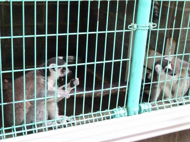 福知山動物園9