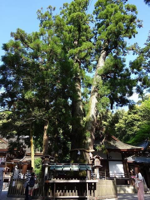 大神神社11