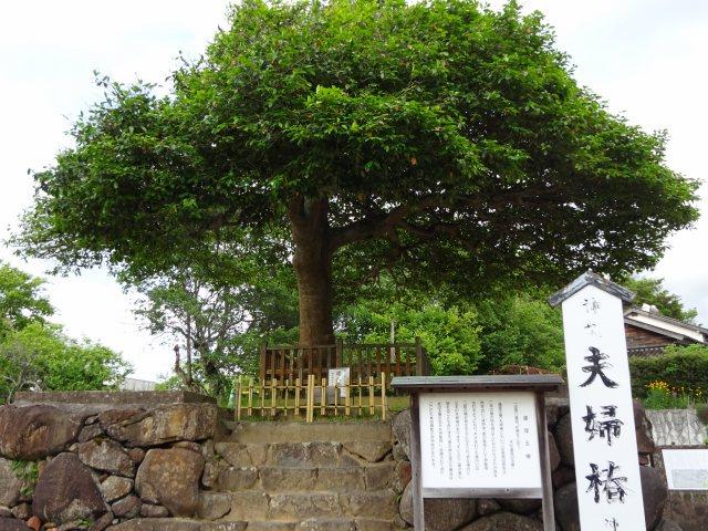 八重垣神社11