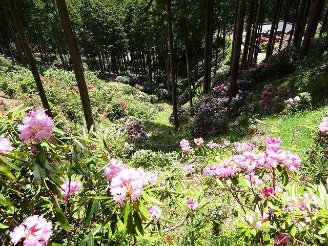 弁財天石楠花の丘12