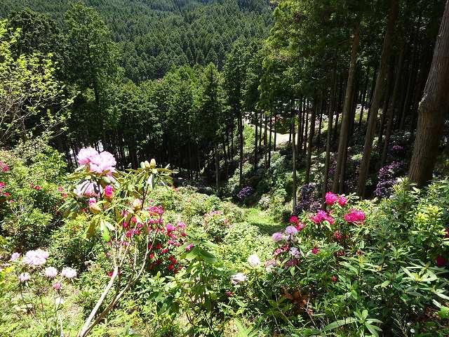 弁財天石楠花の丘13