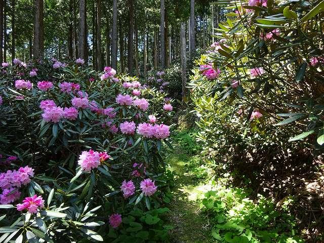 弁財天石楠花の丘14