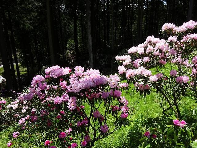 弁財天石楠花の丘16