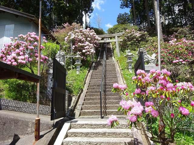 弁財天石楠花の丘4
