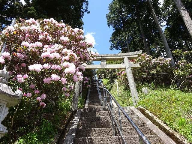 弁財天石楠花の丘5