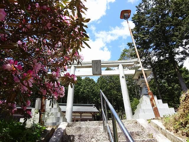 弁財天石楠花の丘6