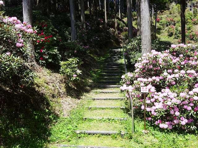 弁財天石楠花の丘8