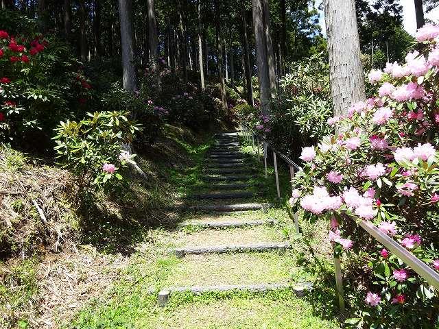 弁財天石楠花の丘9