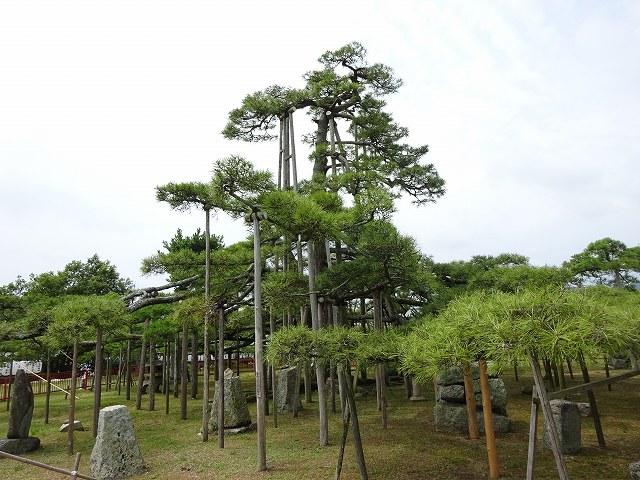 唐崎神社11