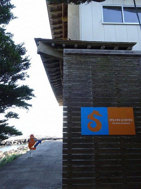 タツノオトシゴハウス8
