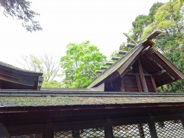 長浜八幡宮5