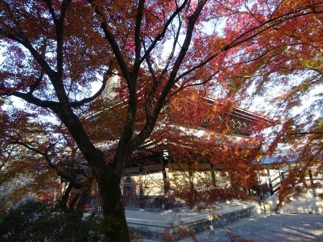 南禅寺15