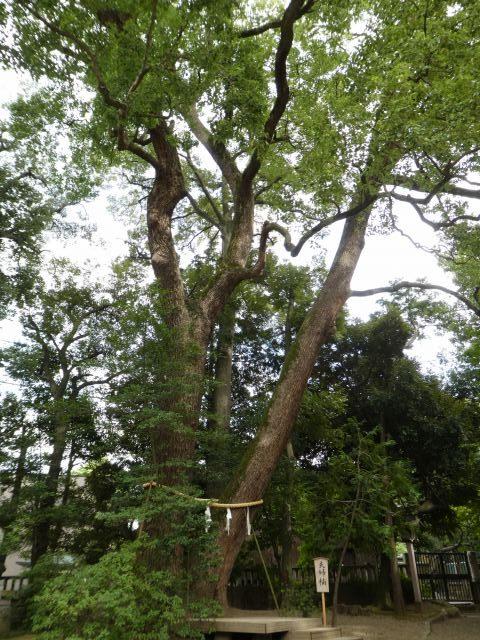 武蔵一宮氷川神社8