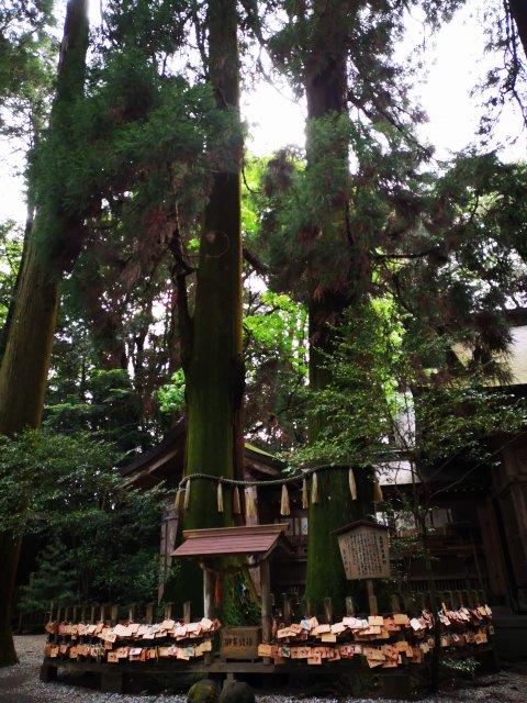 高千穂神社11
