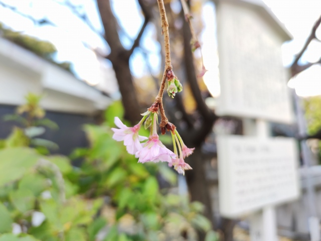 富士浅間神社6