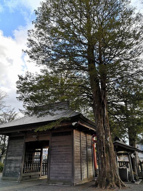 忍野八海浅間神社17