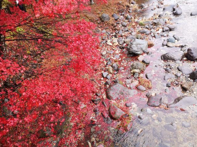 紅の吊り橋12