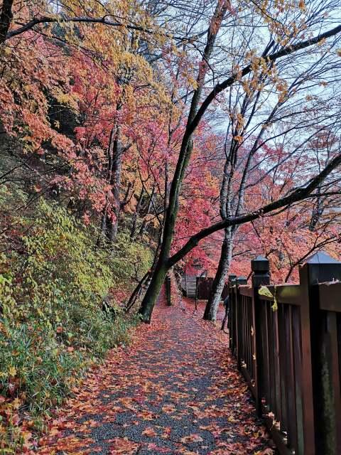 紅の吊り橋14