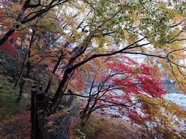 紅の吊り橋16