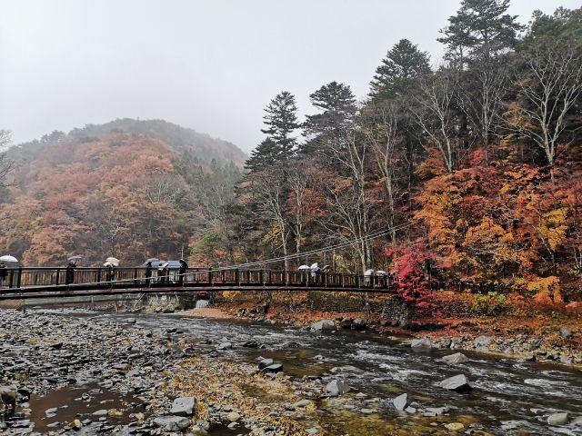 紅の吊り橋3